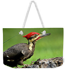 Weekender Tote Bag featuring the photograph Pileated 2 by Douglas Stucky