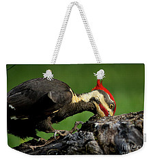 Weekender Tote Bag featuring the photograph Pileated 3 by Douglas Stucky