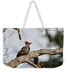 Weekender Tote Bag featuring the photograph pileated Woodpecker 1068  by Michael Peychich