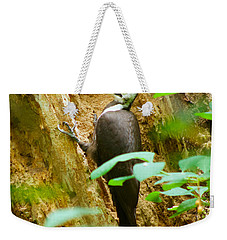 Pileated Woodpecker Weekender Tote Bag by Sean Griffin