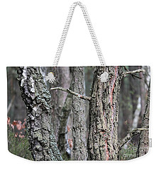 Weekender Tote Bag featuring the photograph Pine And Birch by Dariusz Gudowicz