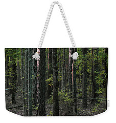 Weekender Tote Bag featuring the photograph Pine Wood Sunrise by Skip Willits