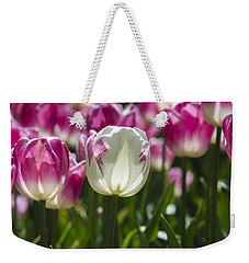 Weekender Tote Bag featuring the photograph Pink And White Tulips by Angela DeFrias