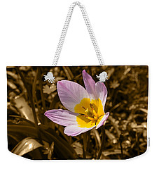 Pink And Yellow Tulip On Sepia Background Weekender Tote Bag
