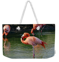 Weekender Tote Bag featuring the photograph Pink Flamingo by Scott Carruthers