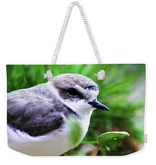 Weekender Tote Bag featuring the photograph Piping Plover by Anthony Jones