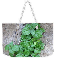 Plant In Stone Naples Italy Weekender Tote Bag