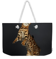Playful Female Bengal Cat Stands On Rear Legs Weekender Tote Bag by Sergey Taran