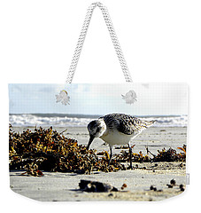 Plover On Daytona Beach Weekender Tote Bag