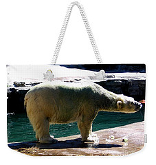 Weekender Tote Bag featuring the photograph Polar Bear 3 by Rose Santuci-Sofranko