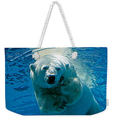 Weekender Tote Bag featuring the photograph Polar Bear Contemplating Dinner by John Haldane