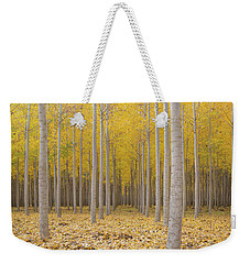 Poplar Tree Farm In Fall Season Weekender Tote Bag