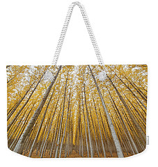 Weekender Tote Bag featuring the photograph Poplar Tree Farm Symmetry In Oregon by Jit Lim
