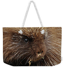Weekender Tote Bag featuring the photograph Porcupine by Glenn Gordon