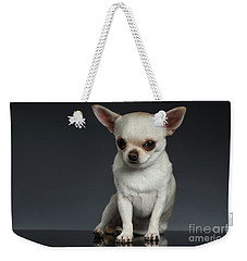 Portrait Little Chihuahua Dog Sitting On Dark Backgroun Weekender Tote Bag by Sergey Taran