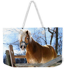 Weekender Tote Bag featuring the photograph Portrait Of A Haflinger - Niko In Winter by Angela Rath