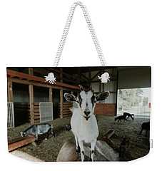 Portrait Of A Happy Goat Weekender Tote Bag