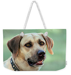 Portrait Of A Yellow Labrador Retriever Weekender Tote Bag