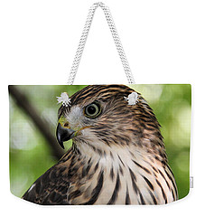 Portrait Of A Young Cooper's Hawk Weekender Tote Bag