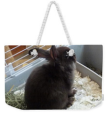 Weekender Tote Bag featuring the photograph Portrait Of Bunbunz by Denise Fulmer