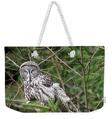 Portrait Of Gray Owl Weekender Tote Bag