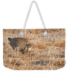 Weekender Tote Bag featuring the photograph Prairie Chicken 11-2015 by Thomas Young