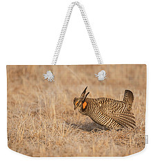 Weekender Tote Bag featuring the photograph Prairie Chicken 8-2015 by Thomas Young