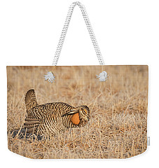 Weekender Tote Bag featuring the photograph Prairie Chicken 9-2015 by Thomas Young