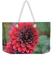 Pretty Blooming Red Dahlia Flower Blossom Weekender Tote Bag