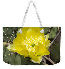 Prickly Pear Cactus Blossom - Opuntia Littoralis Weekender Tote Bag