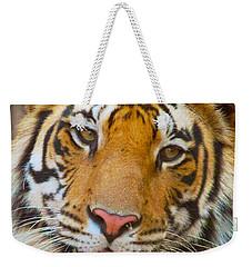 Prime Tiger Weekender Tote Bag by David Beebe