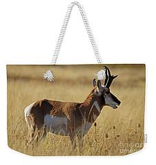 Pronghorn Antelope Weekender Tote Bag by Cindy Murphy - NightVisions