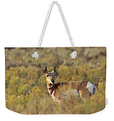 Pronghorn Doe Weekender Tote Bag