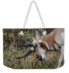 Pronghorn No.2 Weekender Tote Bag