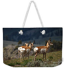 Pronghorns Weekender Tote Bag