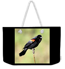 Weekender Tote Bag featuring the photograph Puffed Throat by Shane Bechler