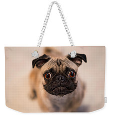 Weekender Tote Bag featuring the photograph Pug Dog by Laura Fasulo