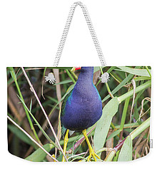 Weekender Tote Bag featuring the photograph Purple Gallinule by Robert Frederick