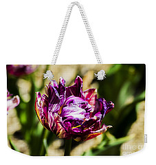 Weekender Tote Bag featuring the photograph Purple Striped Tulip by Angela DeFrias