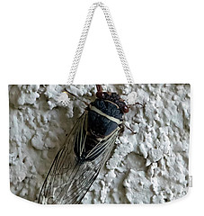 Weekender Tote Bag featuring the photograph Putnam's Cicada by Anne Rodkin
