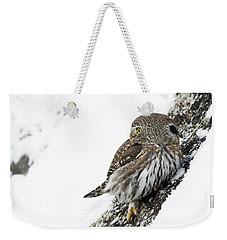 Pygmy Owl Weekender Tote Bag