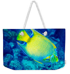 Weekender Tote Bag featuring the photograph Queen Angelfish I by Perla Copernik
