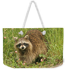 Weekender Tote Bag featuring the photograph Raccoon  by Doris Potter