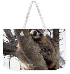 Afternoon Nap-raccoon Up A Tree  Weekender Tote Bag