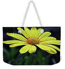 Weekender Tote Bag featuring the photograph Raindrops On Daisy by Judy Vincent