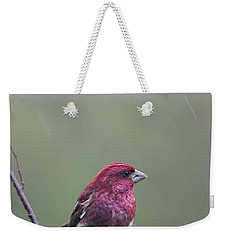 Weekender Tote Bag featuring the photograph Rainy Day Finch by Susan Capuano
