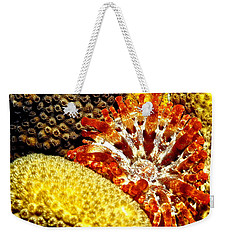 Rare Orange Tipped Corallimorph - Fire In The Sea Weekender Tote Bag
