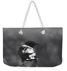 Weekender Tote Bag featuring the photograph Raven In The Sun by Susan Capuano