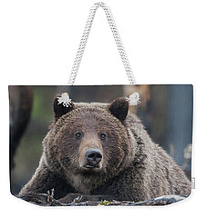 Raw, Rugged And Wild- Grizzly Weekender Tote Bag
