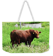 Red Angus Bull Weekender Tote Bag